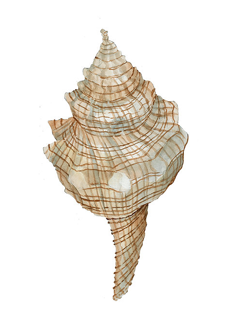 """""""Seashell II"""""""