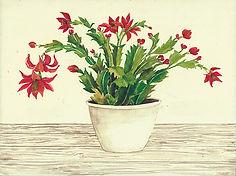 CIN-christmas cactus-1.jpg