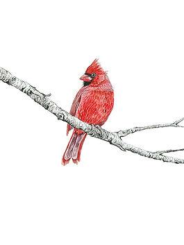 CIN-cardinal-6.jpg