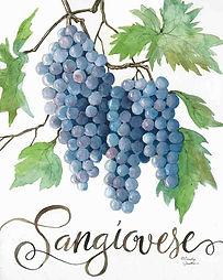 CIN-Sangiovese grapes.jpg