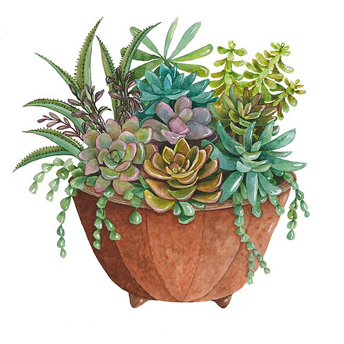 Clay pot full of Succulents I