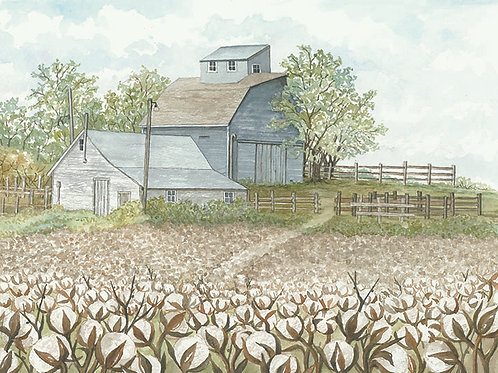Blue Barns and cotton