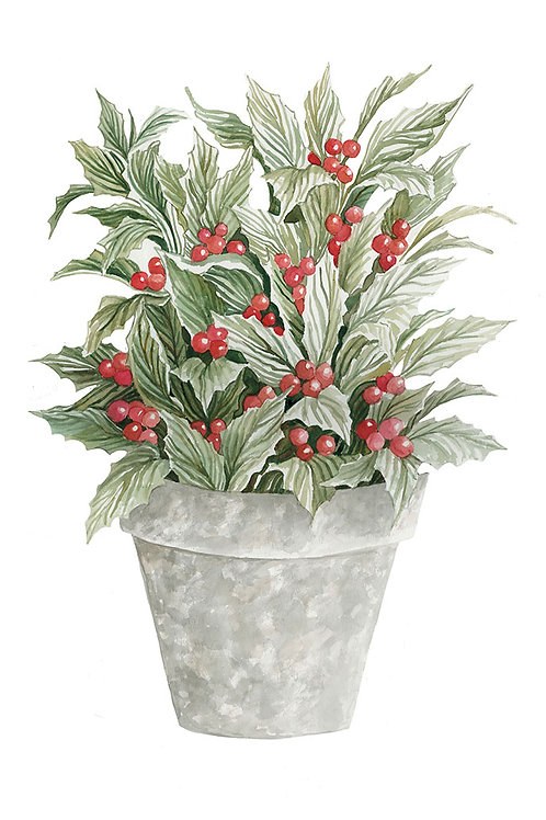 """Holly in Gray Pot"""