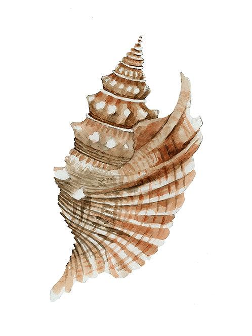 """""""Seashell III"""""""