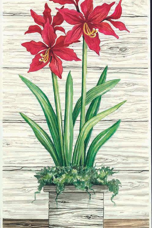 Christmas Amaryllis-Red II