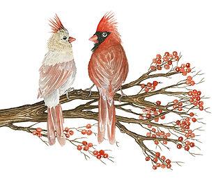 CIN-cardinal-7.jpg