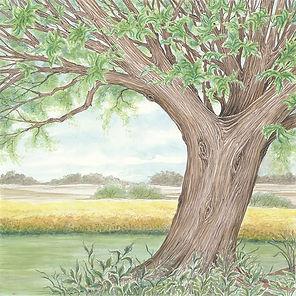 Tree triplicate-2.jpg