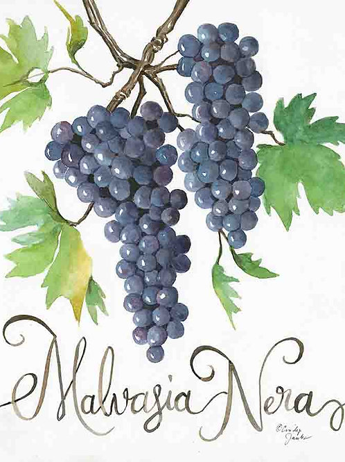 """Malvasia Nera: Grapes of Italy Wine Country""."