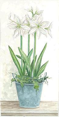 white amaryllis.jpg