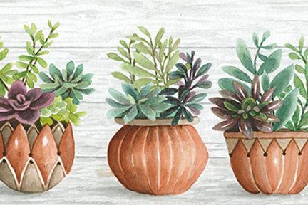 Clay Pots of Succulents II