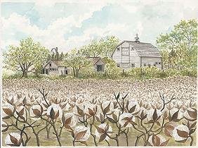 CIN-Barn-cotton field-2.jpg