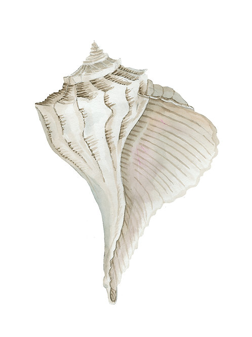 """""""Seashell IV"""""""