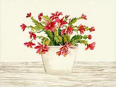 CIN-christmas cactus-2.jpg