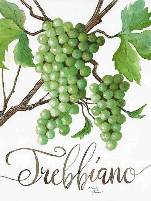 """Trebbiano: Grapes of Italy Wine Country"""