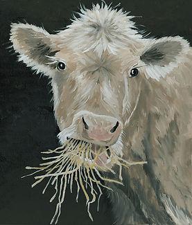 CIN-Hangry cow.jpg