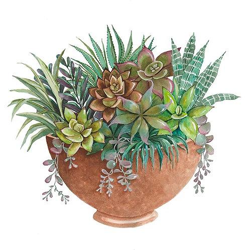 Clay pot full of Succulents II
