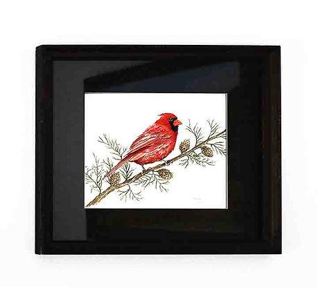 000-Cardinal-Andy.jpg