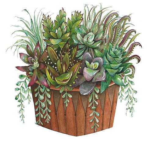 Clay pot full of Succulents III