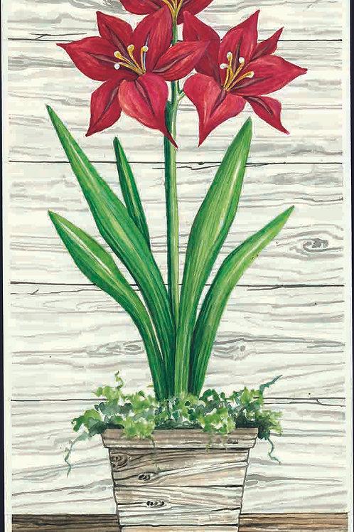 Christmas Amaryllis-Red I