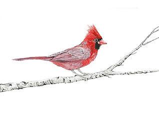 CIN-cardinal-5-EDITED.jpg