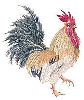 rooster-edited.jpg