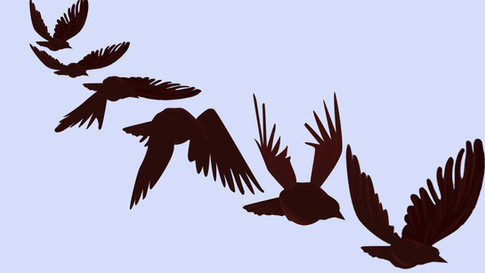 bird animation2 (1).jpg