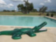 pool with gator side.JPG