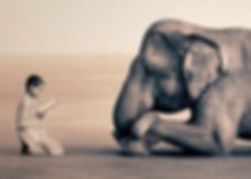 """Индийская сказка """"Слон Ренки"""". Рёто, молодой буддистский монах, жаловался на то,  что никак не может успокоить свой ум. Он все время  скачет — словно коза...  «Или как дикий слон»,— сказал старый учитель дзен.  Рёто, увидев, как заблестели глаза учителя,   догадался, что тот собирается что-то рассказать ему, и сел  у его ног в тени бананового дерева…"""