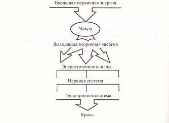 Схема прохождения энергии в теле человека