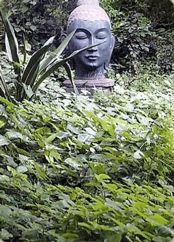 Карта Будды 37 - Путь ясности