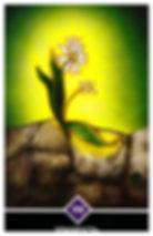 ХРАБРОСТЬ – старший аркан. Семя не может знать, что должно случиться, семя никогда не знало цветка. И семя не может даже поверить, что оно имеет возможность превратиться в красивый цветок. Путь длинен, и всегда безопаснее не пускаться в него, потому что путь неизвестен, ни что не гарантировано.