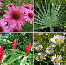 Растения - Язык Света