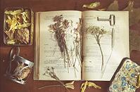 Старинные домашние лечебники