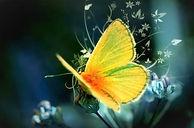 Сказка - Гадюка Скарапея  и Бабочка