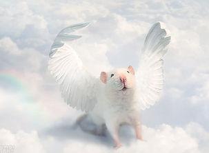 Мышь Марла. Сказка Крайона