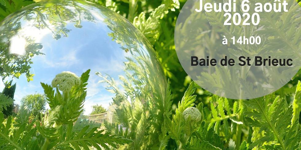 Balade Sophro Nature - Baie de Saint Brieuc - Jeudi