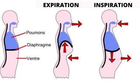Réapprendre à respirer : un élément essentiel pour le bon fonctionnement de notre organisme