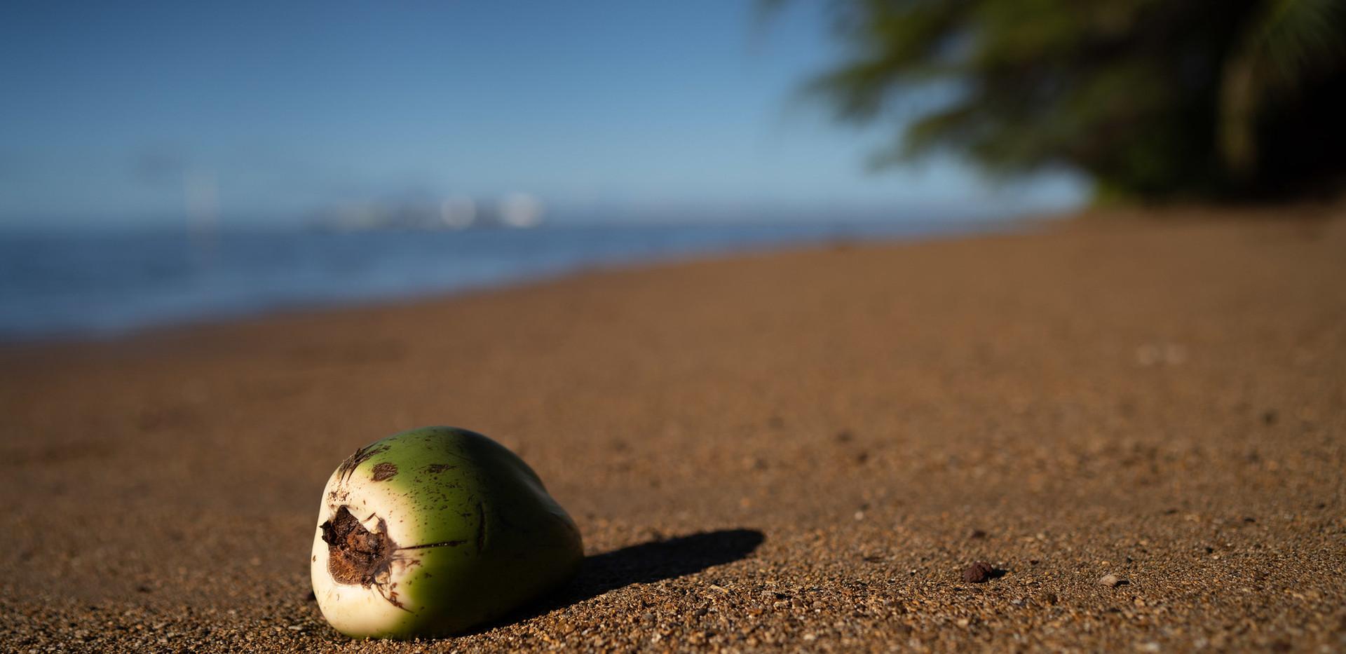 Molokai sand and coconut