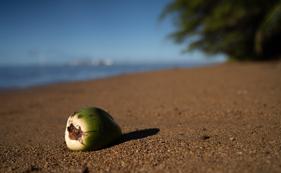 Molokai sand and coconut