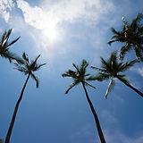 Molokai trees