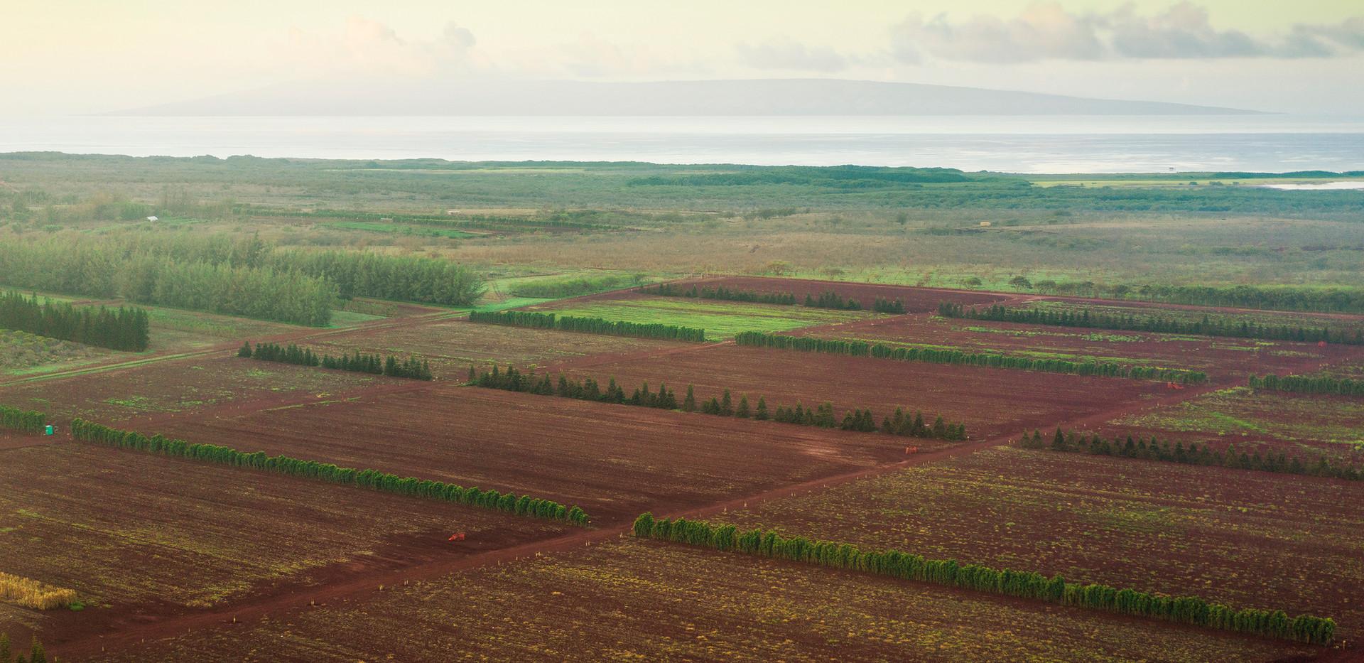 Fields in Ho'olehua