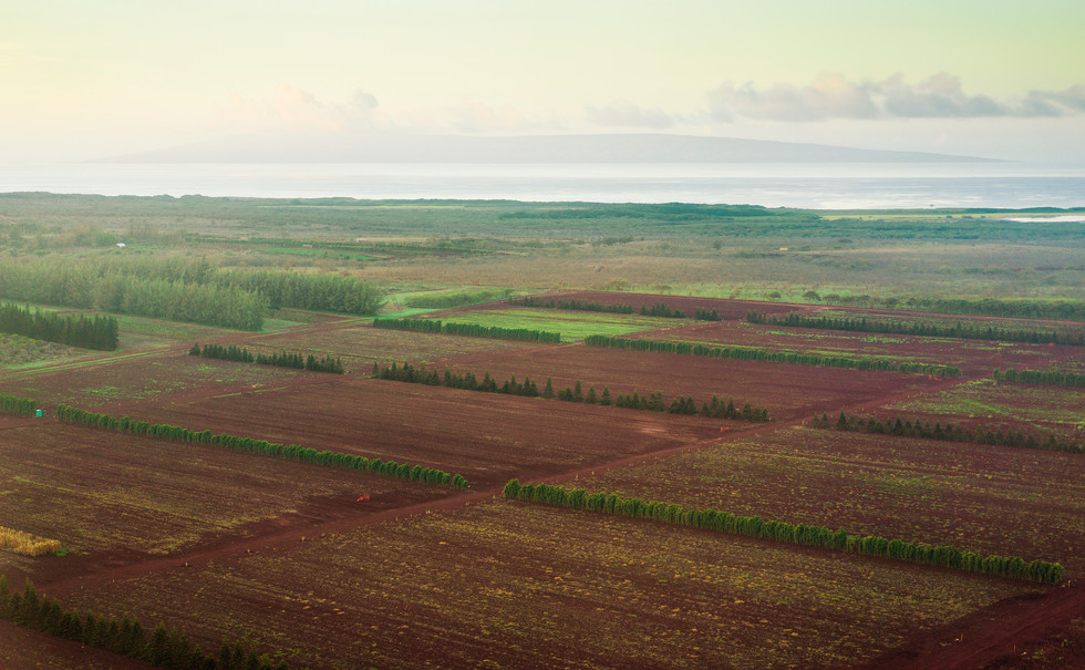 Fields in Ho'olehua
