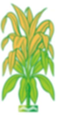 MCAPP logo multicolor.jpeg