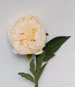 Pivoine blanc/jaune