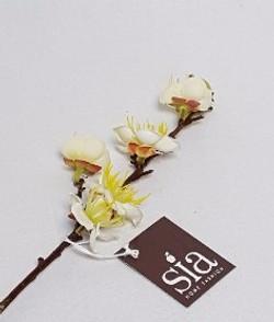 Fleur de cerisier blanche