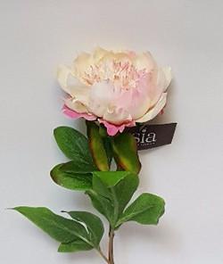Pivoine sauvage rose