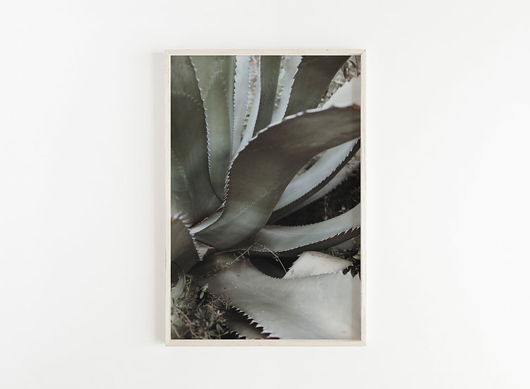 Fine Art Print Aloe I