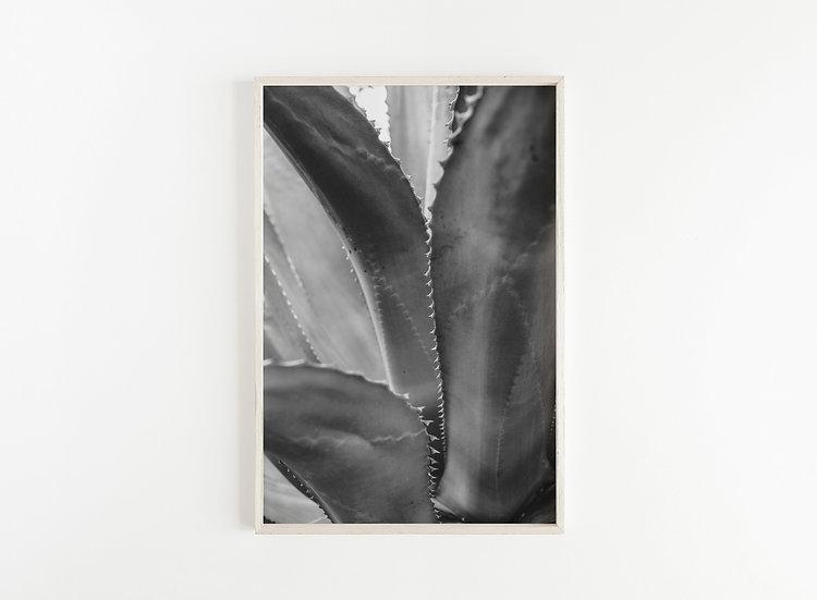 Fine Art Print Aloe II