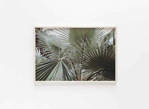 Fine Art Print Palmen III