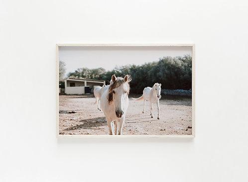 Fine Art Print Pferd II